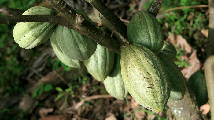 Cuivre, Pétrole, Cacao : l'hebdo des matières premières