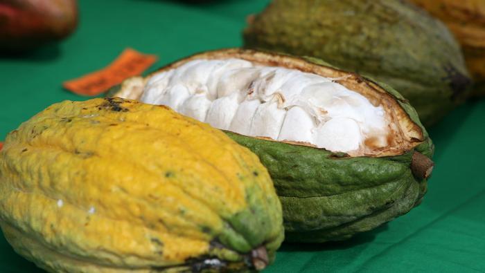 Palladium, Gaz, Cacao : L'hebdo des matières premières