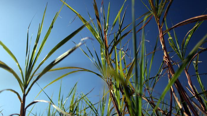Or, Argent, pétrole, sucre : L'hebdo des matières premières