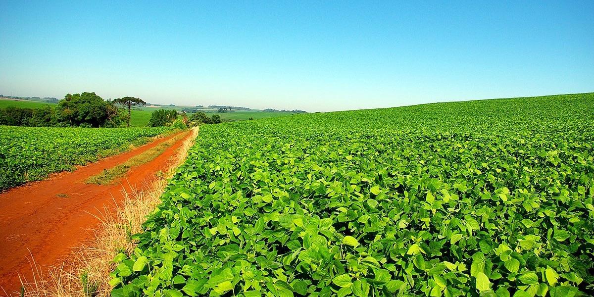 São Paulo Sojabohnen, Landwirtschaft