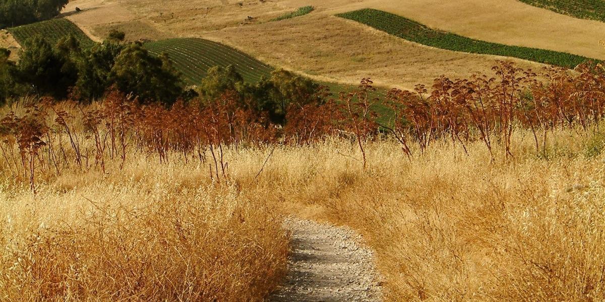 Feld, Landwirtschaft, Sizilien