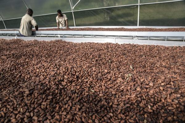 How To Trade Cocoa Cocoa Trading Strategies Ig Bank Swiss